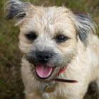 Ontspannen wandelen met de hond: iedereen kan het leren!