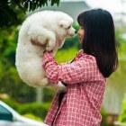 Doggydance voor de actieve hond
