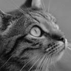 Waarom plast een gezonde kat in huis?