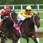 Conditie paard meten: hartslag, longvolume en bloeddruk