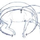 De spieren van het paard