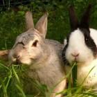 Tandproblemen bij konijnen: oorzaken en symptomen