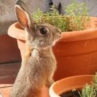 Een konijn zindelijk maken in 5 efficiënte stappen