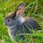 De verzorging van konijnen bij warm weer