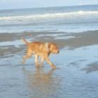 Aan zee met de hond: de gevaren en tips