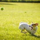 Een fitte hond, een fitte baas