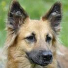 Hondenrassen en hun karaktereigenschappen