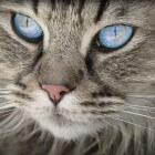 Allergie en toch een kat? Het kan wel degelijk
