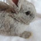 Traanoog bij konijnen: oorzaken en behandeling