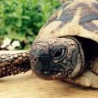 Landschildpad kopen. Terrarium en andere benodigheden