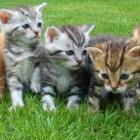 De verzorging van katten