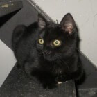 Weetjes over zwarte katten