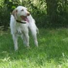 DNA-test Wisdom Panel Insights voor honden kruisingen