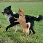 Een blije hond is een hond in balans