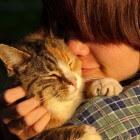 Weetjes voor de kattenliefhebber