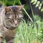 Katten in de tuin, wegjagen helpt niet
