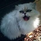 Het kattenluikje