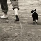Actief wandelen met je hond
