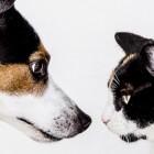 Zylkène gebruiken tegen stress en angst bij hond of kat