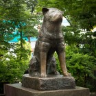 Beroemde honden: Laika, Rin Tin Tin, Patrache en Hachiko