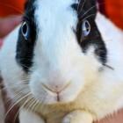 Wat ziet een konijn? Ogen en zicht van konijnen