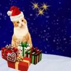 Combinatie kat en kerst, opletten!