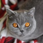 De ideale leefomgeving voor de indoor kat