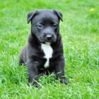 Onderdanig urineren bij honden: Oorzaken en adviezen