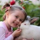 Je konijn tam maken, hoe doe je dat?