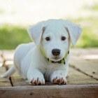 Je hond belonen: Welk voedsel is giftig voor honden?