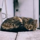 Beloontherapie voor zindelijkheid bij kittens