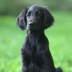 Hondenlikjes in het aangezicht, onschadelijk of gevaarlijk?
