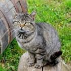 De krabton: een fijn kattenmeubel