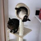De kattentoren: een kattenmeubel met verschillende etages
