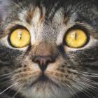 Kat aanlijnen: gebruik van een lijn en tuigje bij katten