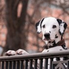 Hondenpaspoort: verplicht vanaf 2020