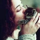 Hoe men het best een kat aait en waarom aaien gezond is