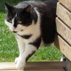 Kattengedrag: verhuizen en verdwalen