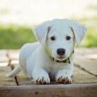 Petbnb: een betrouwbare oppas vinden voor je huisdier