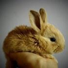 Aanschaf konijn: waar moet je op letten?