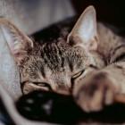 Kattenhangmat: laat je kat helemaal tot rust komen in huis