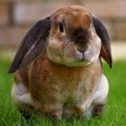 Alles over castratie en sterilisatie bij het konijn