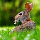 Eetgedrag van het konijn