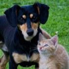 Opvoeding puppies en kittens