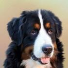 Voorkom levensgevaarlijke hartwormen bij uw hond