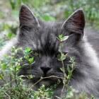 Kattenvoeding: een inleiding