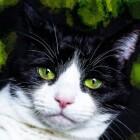 Kattenvoeding: extra's
