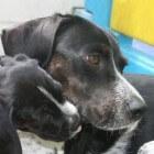 Hondenweetjes voor (toekomstige) hondeneigenaars