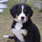 Een pup kopen, waar moet ik op letten?