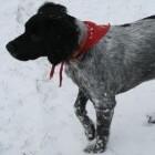 Honden in de winter, niet altijd rozengeur en manenschijn!
